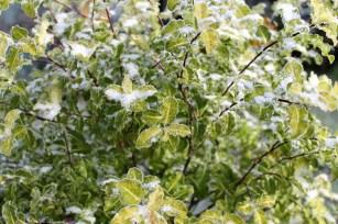 greenery in February