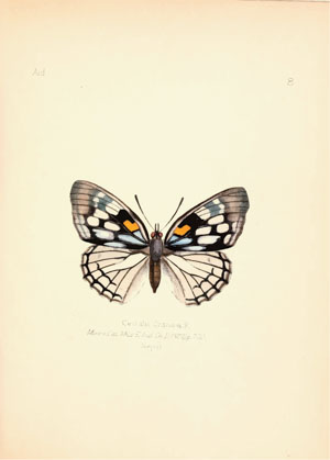 Aid to the identification of insects Charles Owen Waterhouse 1890