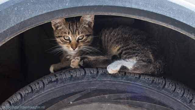 kat-op-autoband