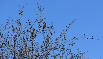 Bird in Tree - Yaqan Nukiy