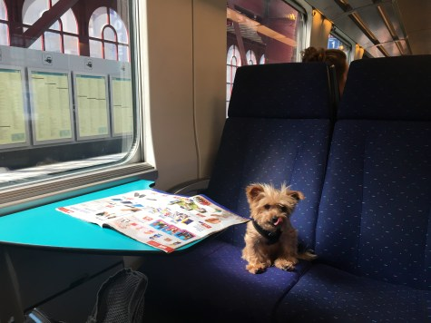 HOW TO TRAVEL WITH YOUR DOG: Roger Wellington's expert guide to international dog travel