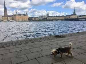 https://wetnoseescapades.com/healthy-travel-tips/