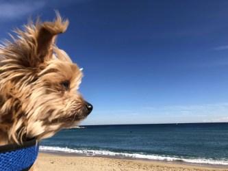 10 BEST Dog-Friendly Restaurants in Barcelona, Spain