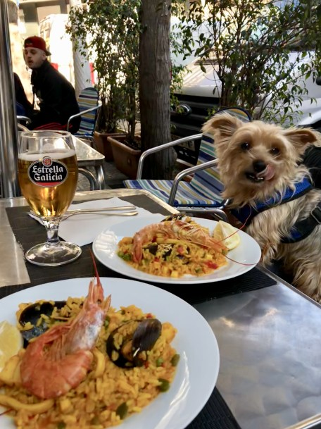 10 BEST Dog-Friendly Restaurants in Barcelona