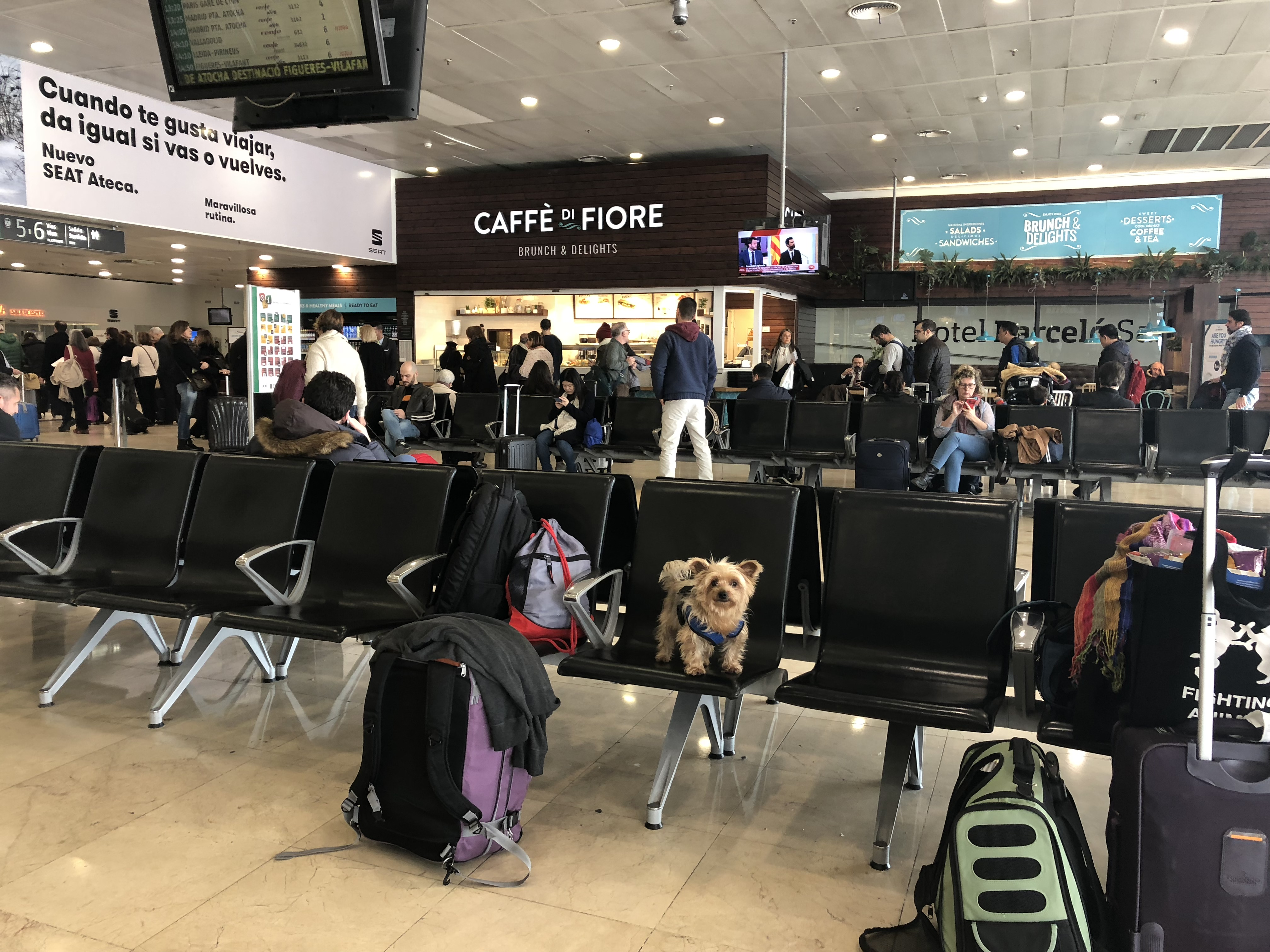 6 MUST-KNOW Tips for in-cabin international dog travel
