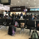 6 MUST-KNOW tips for international dog travel