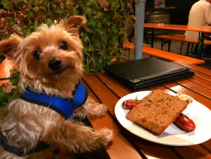 A yorkie's guide to healthy travel