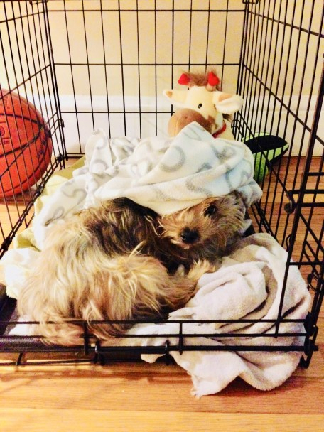 10 reasons NOT to crate your dog