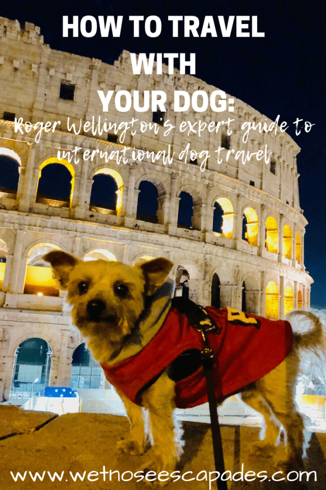 HOW TO TRAVEL WITH YOUR DOG_Roger Wellington's expert guide to international dog travel