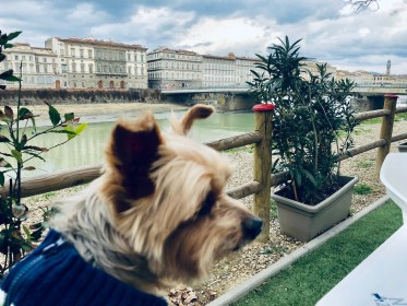 Dog-Friendly Travel in Florence, Italy