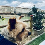 Dog-Friendly Florence, Italy: An American Dog in Florence