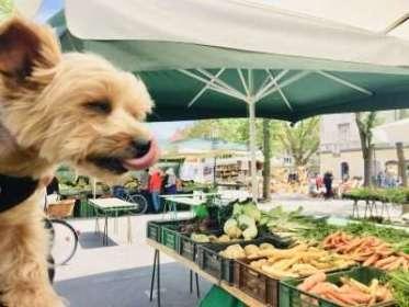 10 Healthy Dog Travel Treats