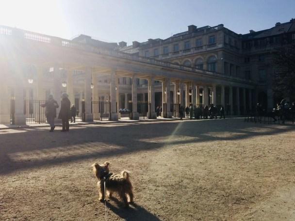 Roger Wellington, the world traveling dog: 10 Random Facts!