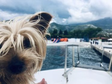 Why Dogs make the BEST Travel Buddies