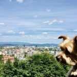 Is Ljubljana, Slovenia Dog-Friendly? A Yorkie's Guide to Visiting Ljubljana with a Dog