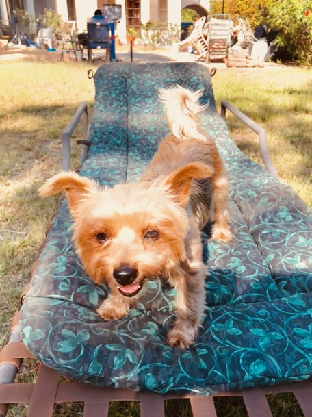 """Why dogs don't belong in the """"backyard"""""""