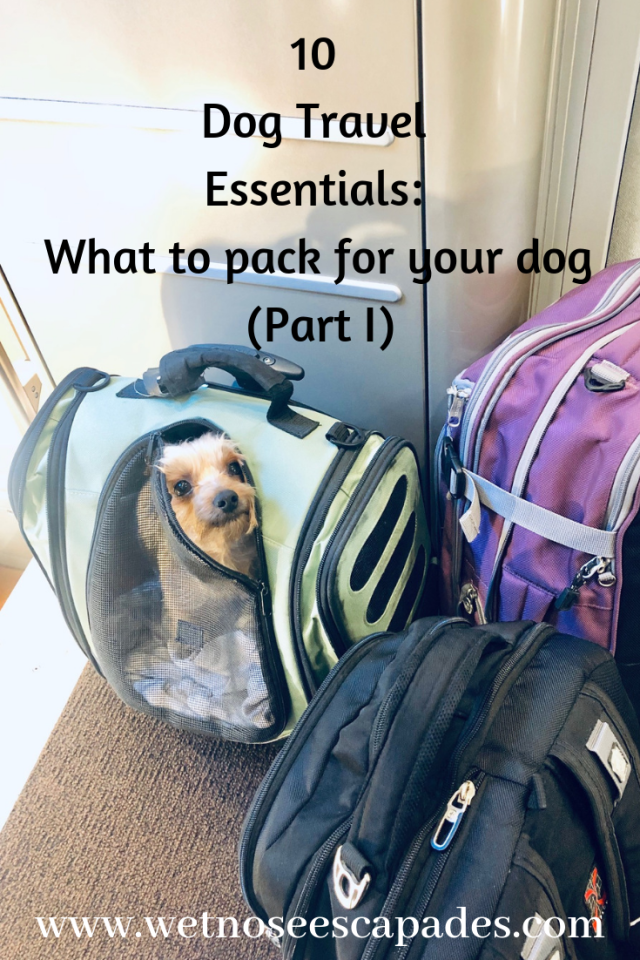 10 Dog Travel Essentials_ What to pack for your dog