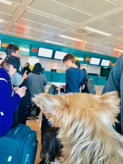 Essentials for Dog Travel