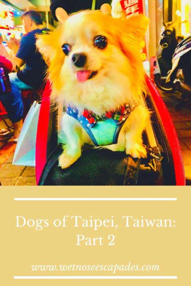 Dogs of Taipei, Taiwan: Part 2