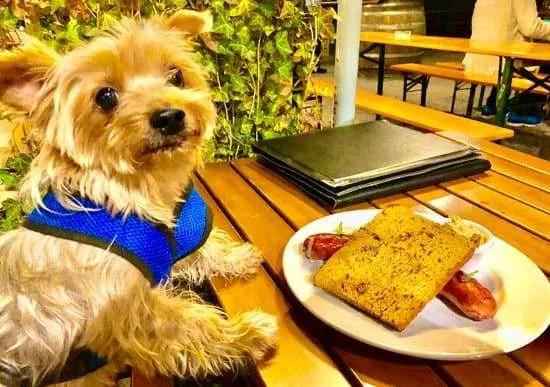 dog friendly activities in vienna dog travel in austria