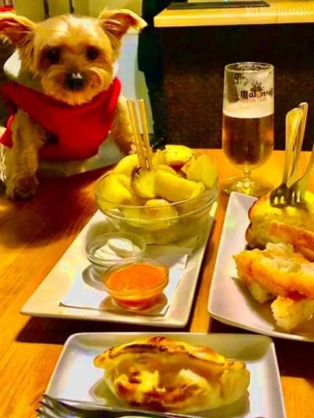 15 Human Food for Yorkies
