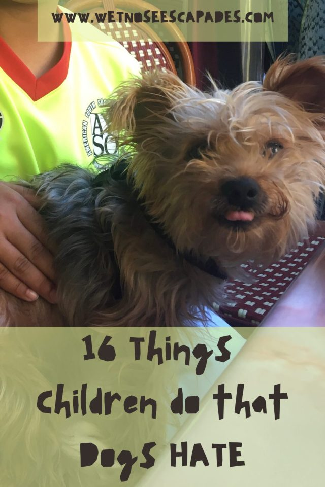 16 Things Children do that Dogs HATE