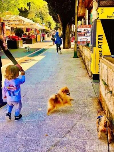 why dogs bite children