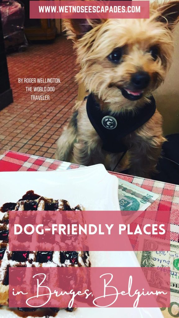 Dog-Friendly Places in Bruges Belgium
