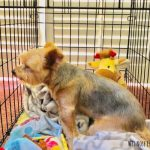 Why Your Dog is Barking in the Crate + How to STOP it