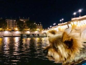 Dog Travel in Paris: A Yorkie studies the Parisians