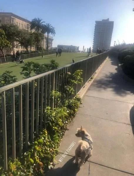 Yorkie Dog at Lafayette Park_San Francisco Dog-Friendly Activities