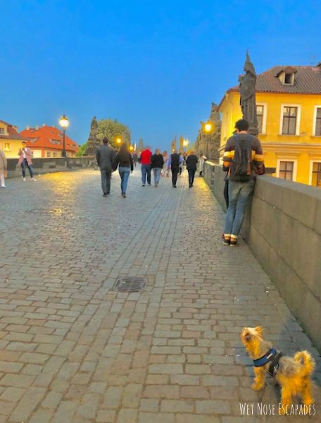 Traveling to Prague, Czech Republic with a DOG
