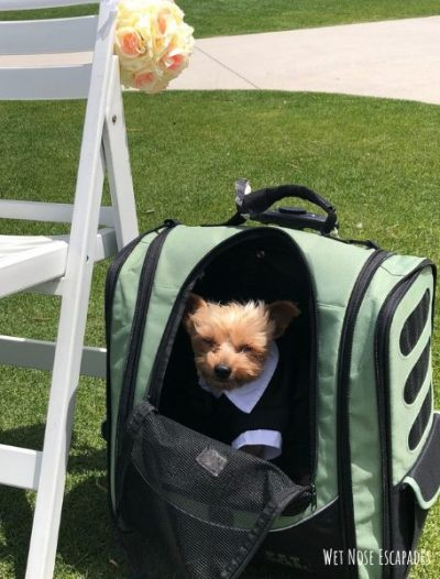 What to Pack for a Yorkie Wedding