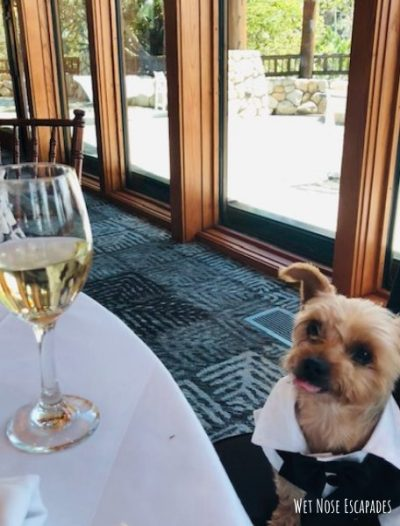 incorporate your yorkie dog into a wedding