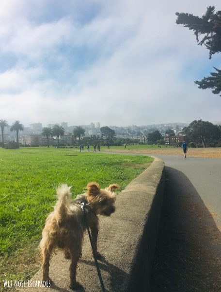 Dog-Friendly Activities in San Francisco Great Meadow