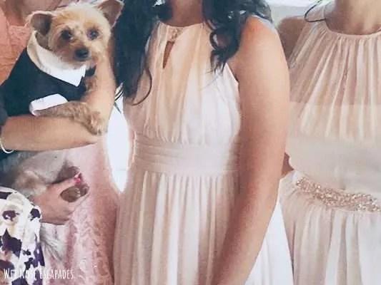 Yorkie Dog Wedding Attire