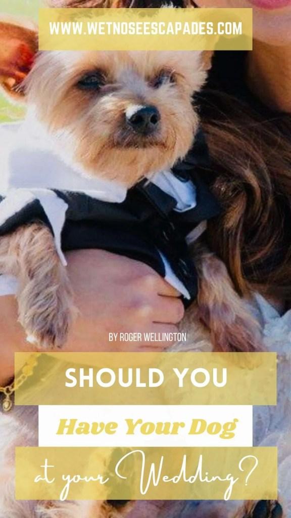 yorkie dog wedding tips