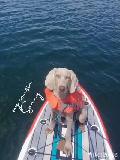 kayaking in monterey bay, dog friendly