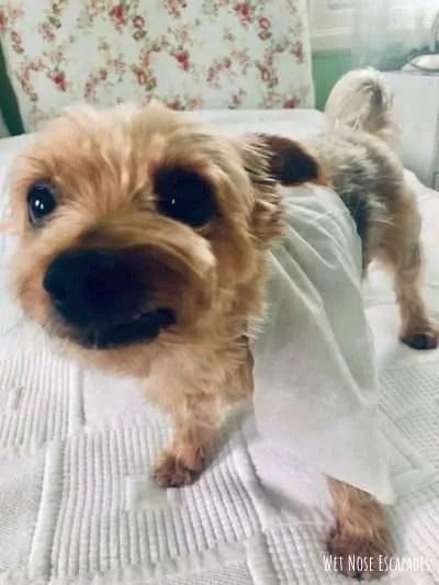 wipes for traveling senior dog