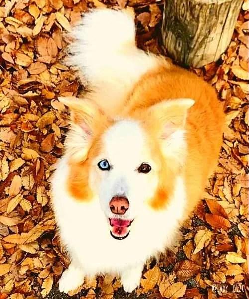 Japanese Border Collie - Dog friendly Japan