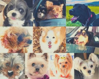 Is Japan Dog-Friendly? Japanese Dog Lifestyle + Dog Travel to Japan Guide