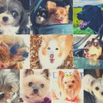 Is Japan Dog-Friendly? Japanese Dog Lifestyle + Dog Travel to Japan Guide