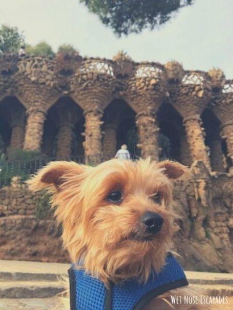spain dog friendly parc guell
