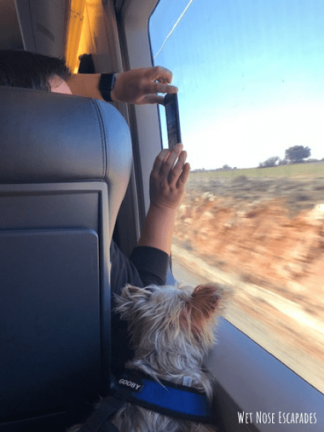 dog friendly trains in Spain