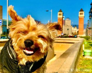 Is Spain Dog-Friendly? A Yorkie's Guide to Dog Travel in Spain