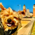 Is Spain Dog-Friendly? A Guide to Dog Travel in Spain