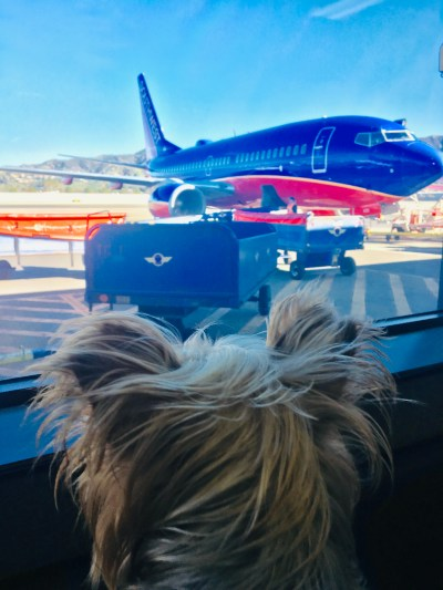 14 Holiday Dog Travel Tips