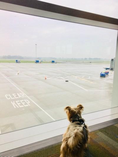 14 Holiday Dog Travel Tips