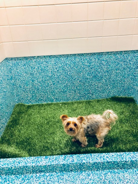 how to potty train your dog without a crate