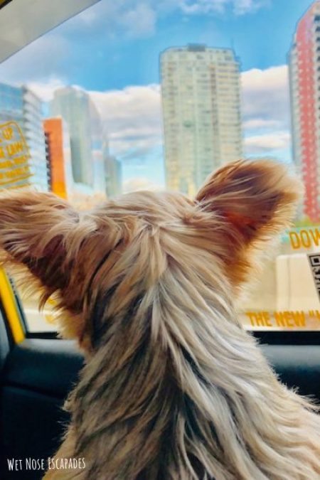 dog-friendly cabs vancouver_Places to Take Your Dog in Vancouver, B.C.